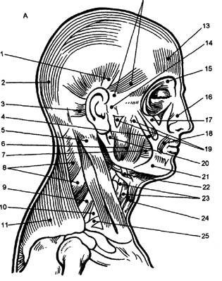 миостимуляция лица