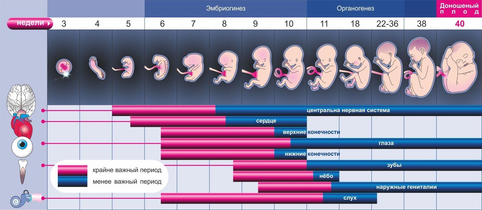 Со скольки недель начинается токсикоз у беременных