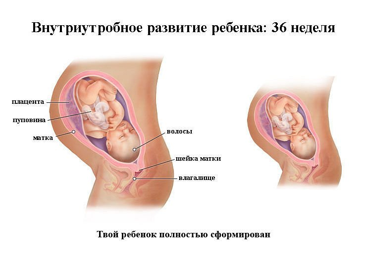 Розвиток плода і особливості протікання вагітності по тижнях. Опис відчуттів і змін дитини по триместрах