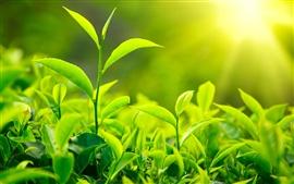 Photo of Маски із зеленого чаю для особи