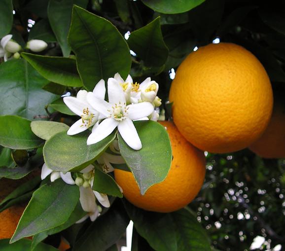 Photo of Маски з апельсина для обличчя