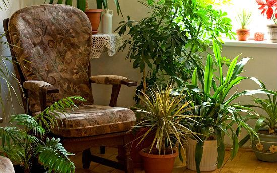 Photo of Які кімнатні рослини люблять тінь?