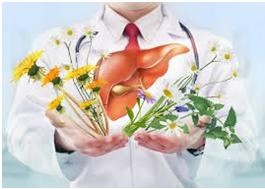 Photo of Найкращі ліки для печінки