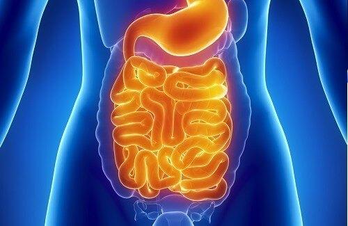 Photo of Головні ознаки наявності паразитів в організмі