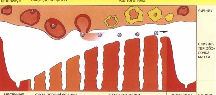 Гормоны для увеличения груди