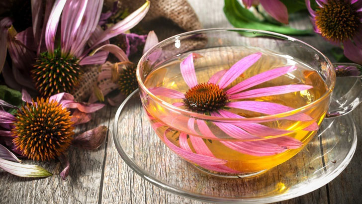 Чай из свежих цветков эхинацеи