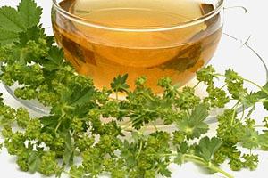 Чай из травы и цветов манжетки