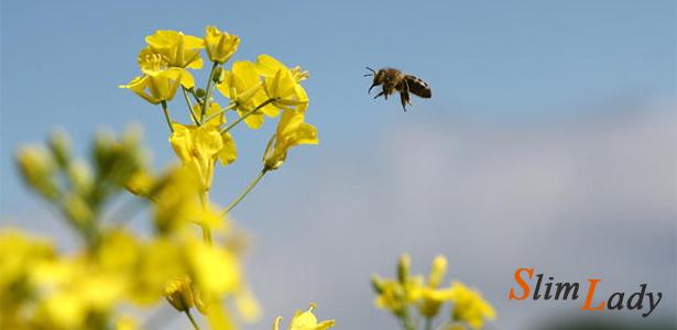 Кому можно рапсовый мёд