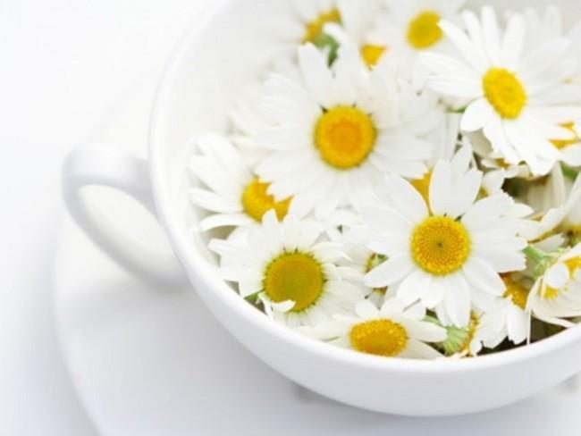 Масло ромашки: користь і застосування