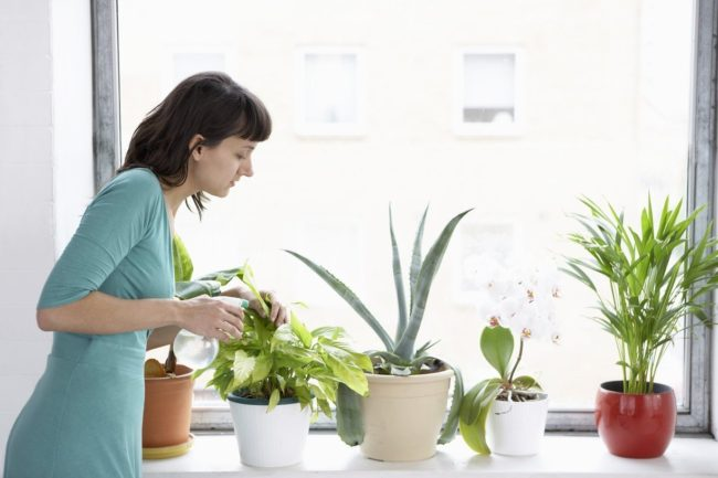 Місячний календар пересадки кімнатних рослин 2017
